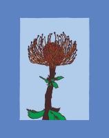 10_banksia-flower-coloured.jpg