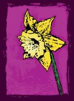 10_daffodil-copy.jpg